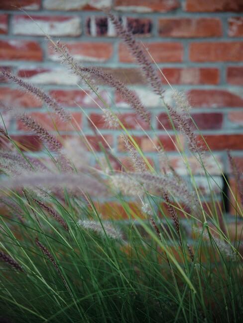Vysoké trávy v záhrade