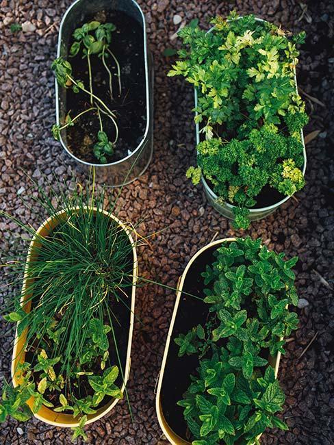 zelené bylinky v kvetináčoch