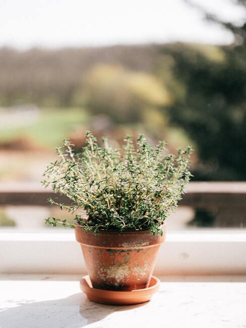 bylinky ako dekorácia