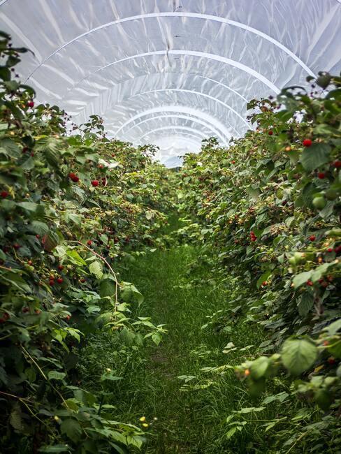 Pestovanie v skleníku