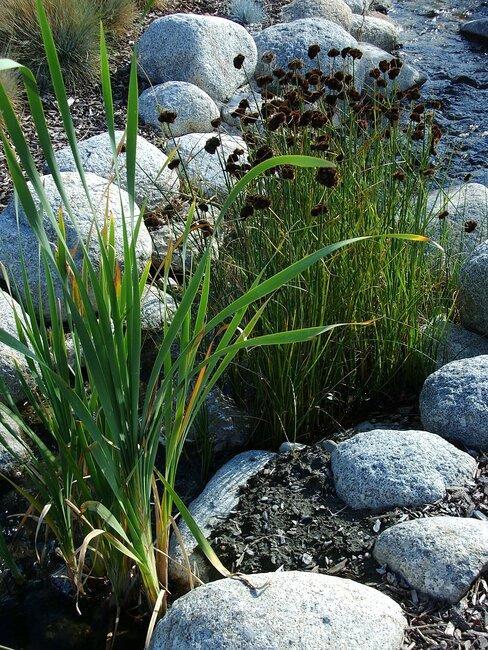 Okrasné trávy a jazierko