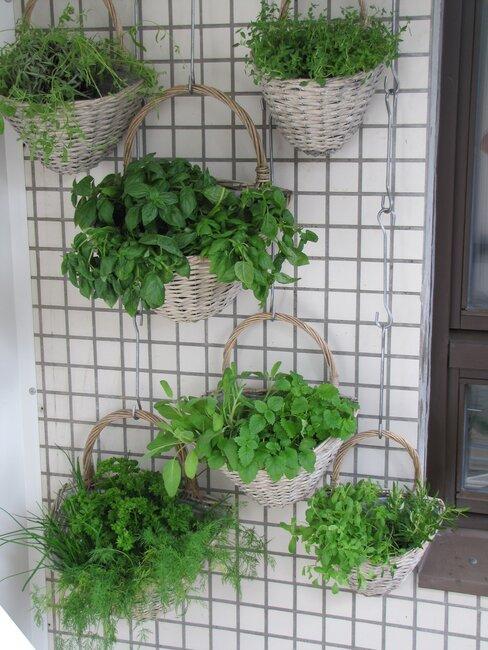 Zelená vertikálna záhrada