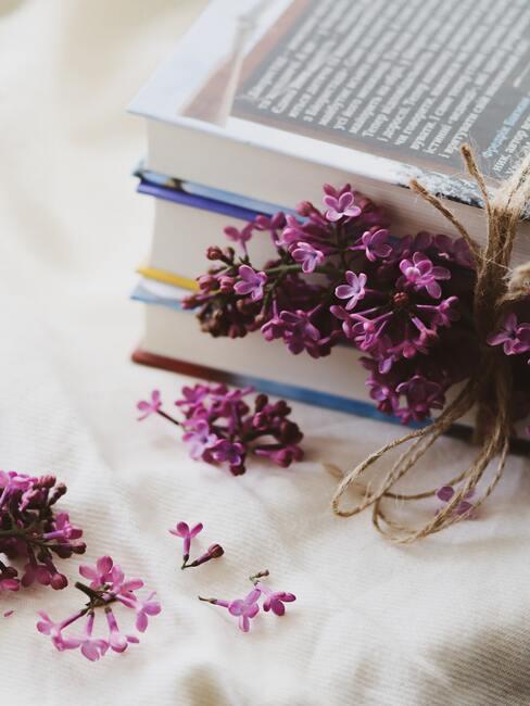Pestovanie levandule pre jej vôňu