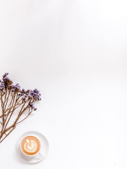 Levanduľa a jej vôňa
