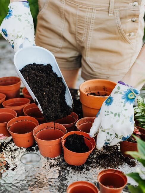 príprava na sadenie