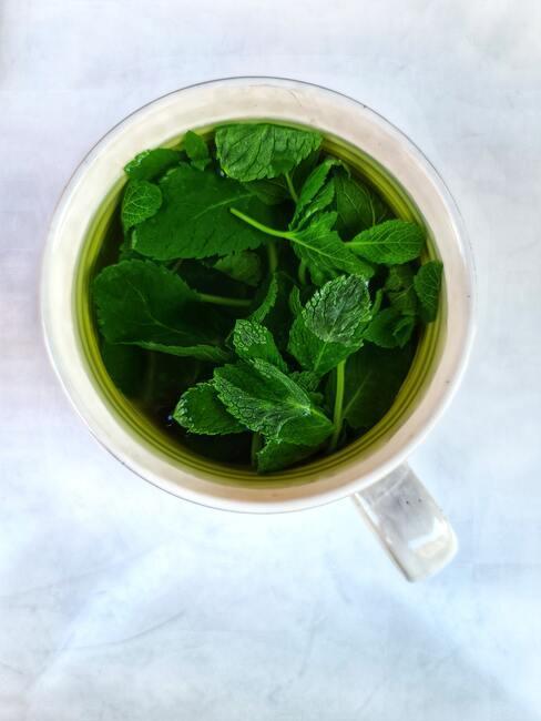 Mäta pestovanie: čaj s mätou