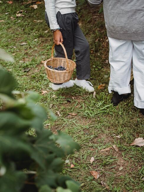 Pestovanie hrozna v záhrade