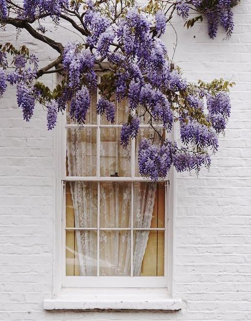 strom pri okne