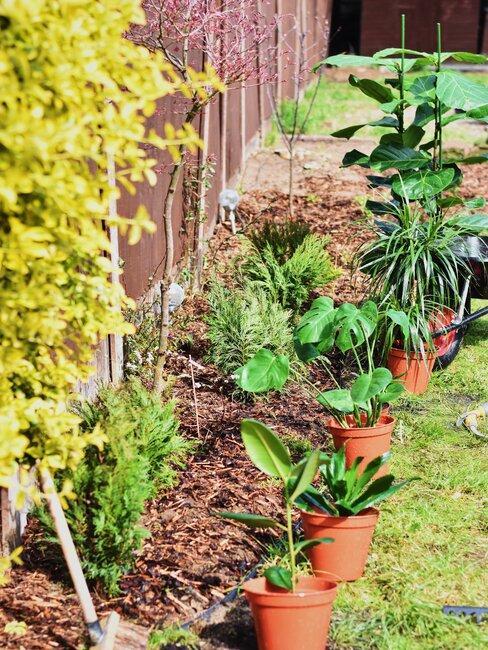 Rukola v záhrade