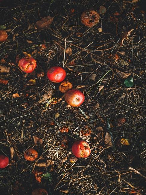Kompost s jablkami