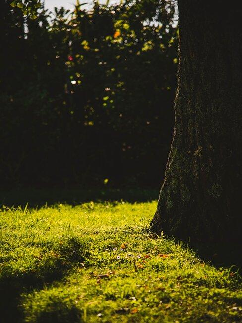 Záhrada a burina