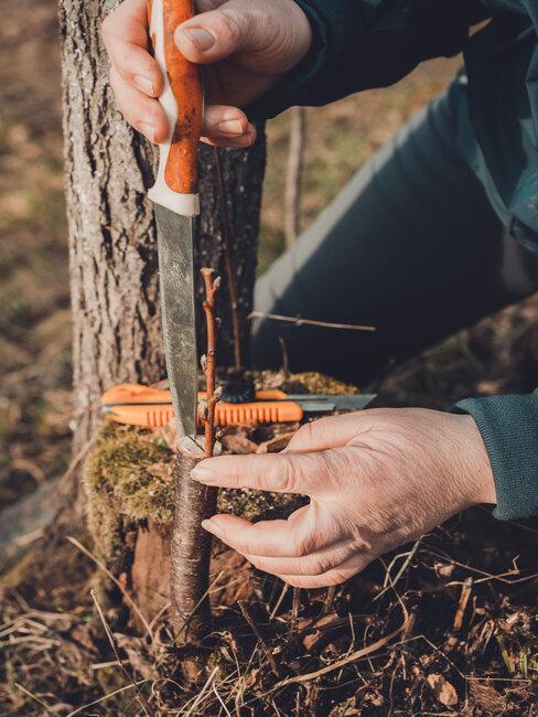 Štepenie a vrúbľovanie stromov