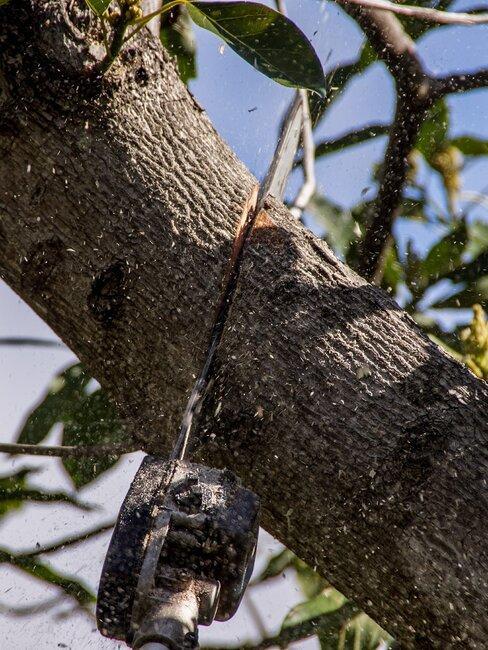 Rezanie stromu