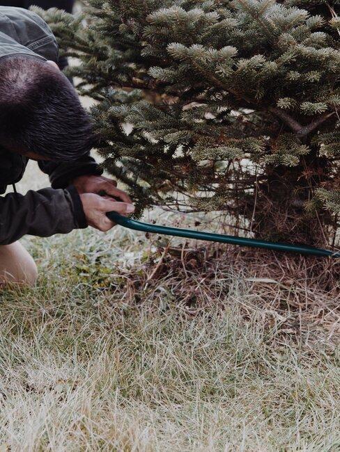 Pílenie stromu