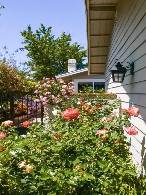 Kvety okolo domu
