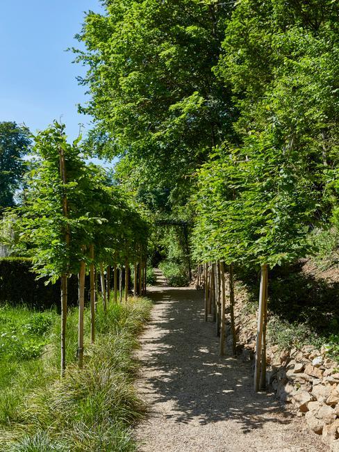 Výsadba stromov v záhrade