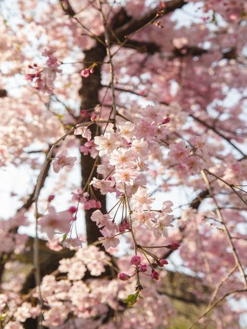 kvitnúci strom