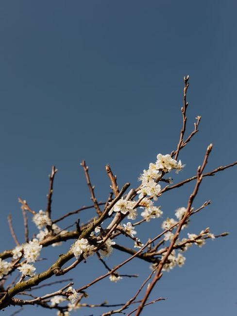 kvitnúce stromy