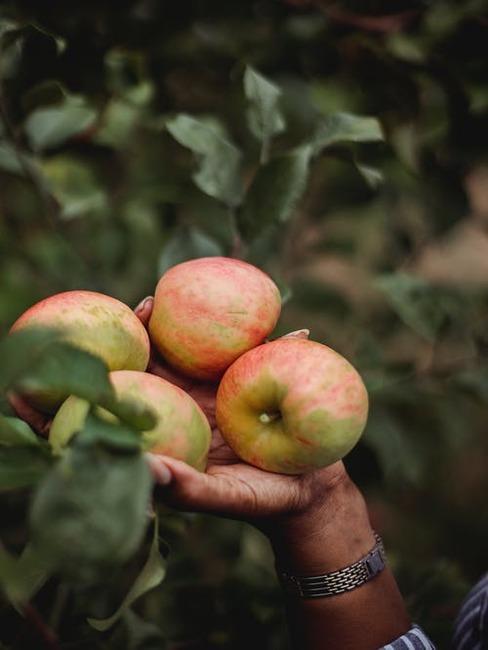 jabĺčka