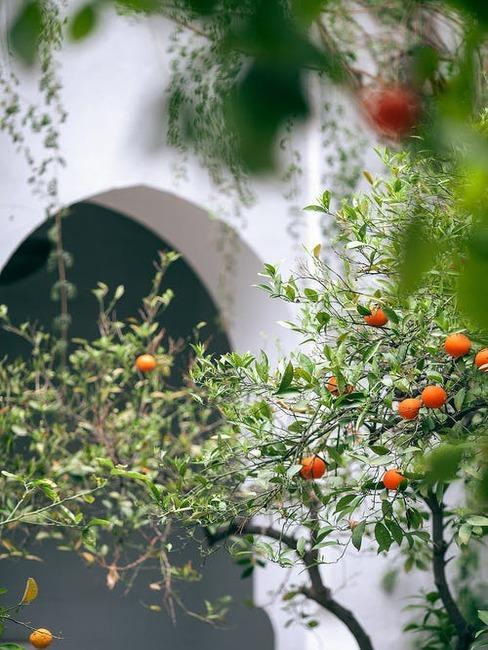 strom plný jabĺk