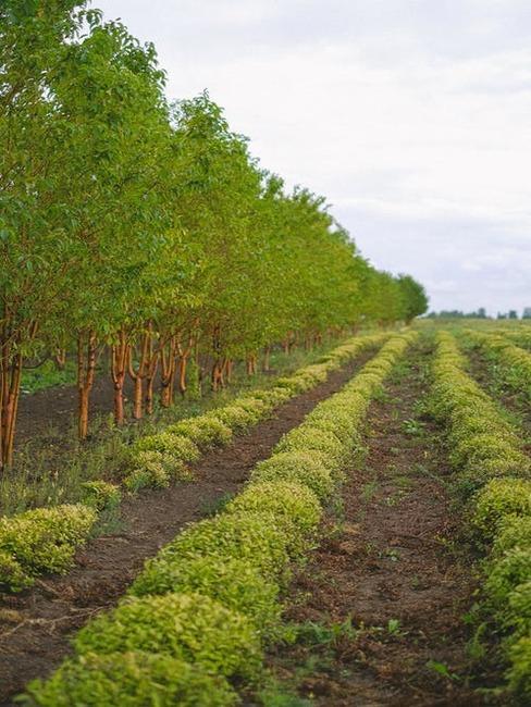 záhrada plná stromov