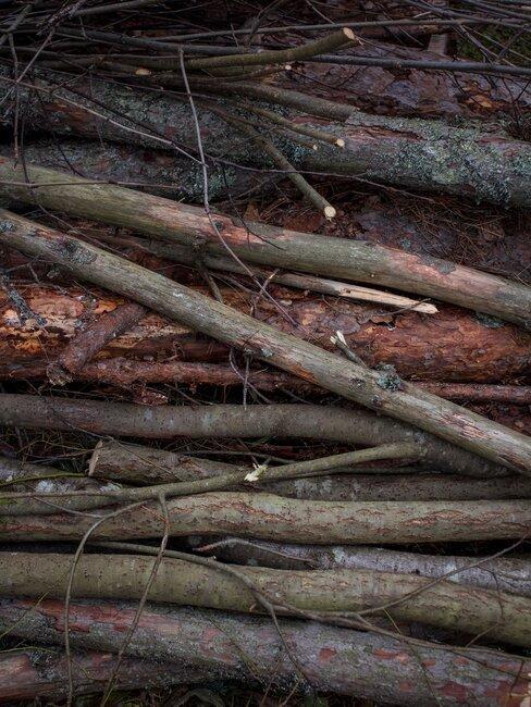 Odstrihnuté konáre stromov