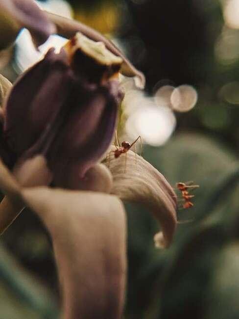 hnedý kvet