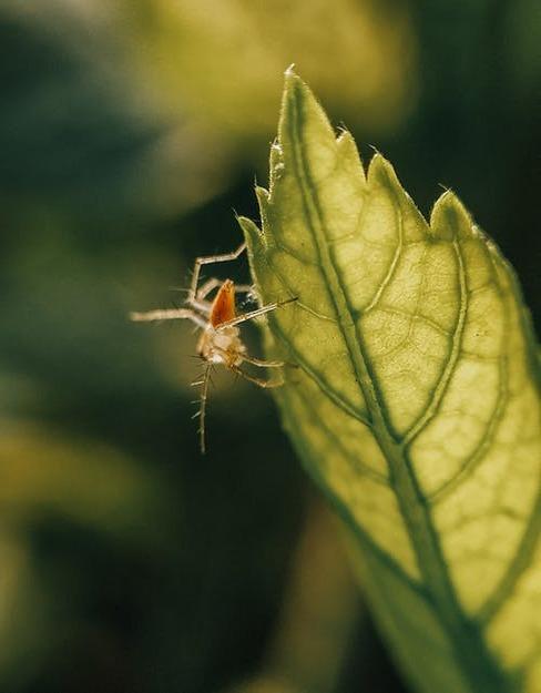 mravec na kvete