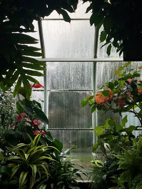Dážď za oknom vnútornej záhrady