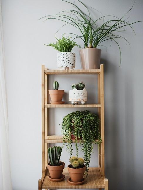 Kombinácia zelenej a drevenej v interiéri