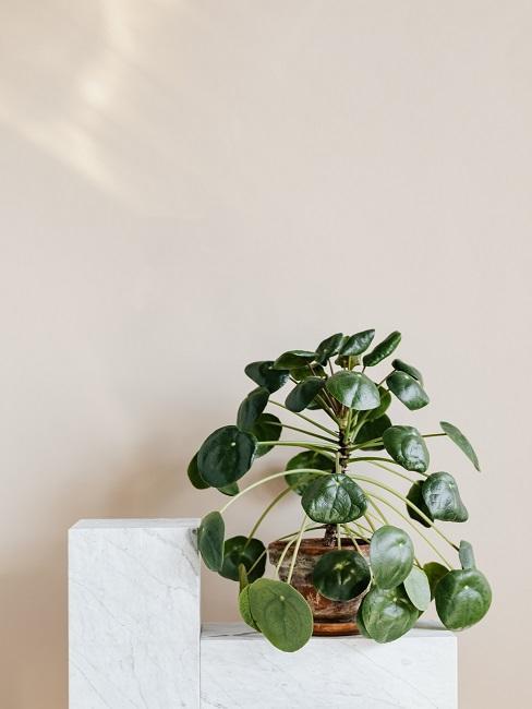Béžová so zelenou v interiéri