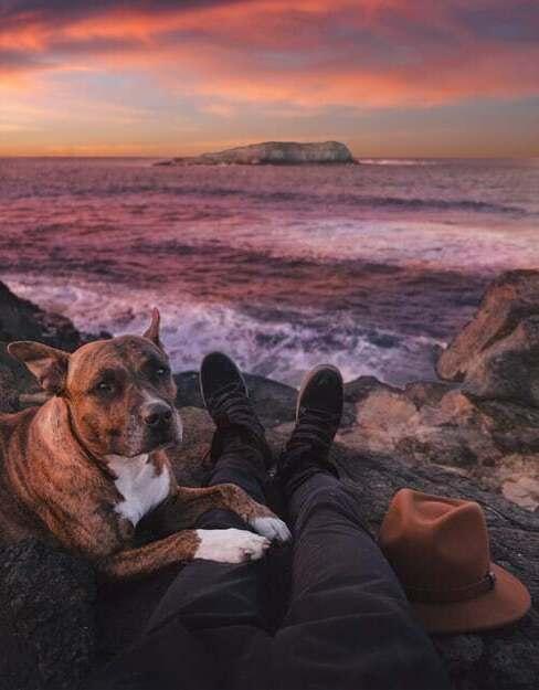pes a západ slnka