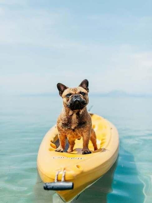 pes vo vode