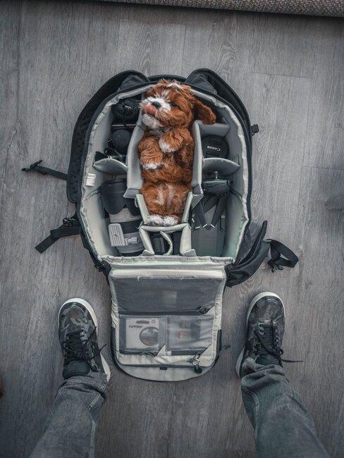 pes v batožine