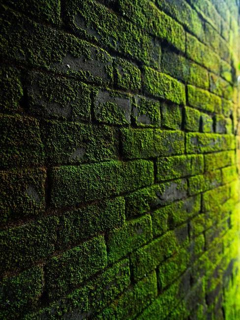 Tehlová machová stena
