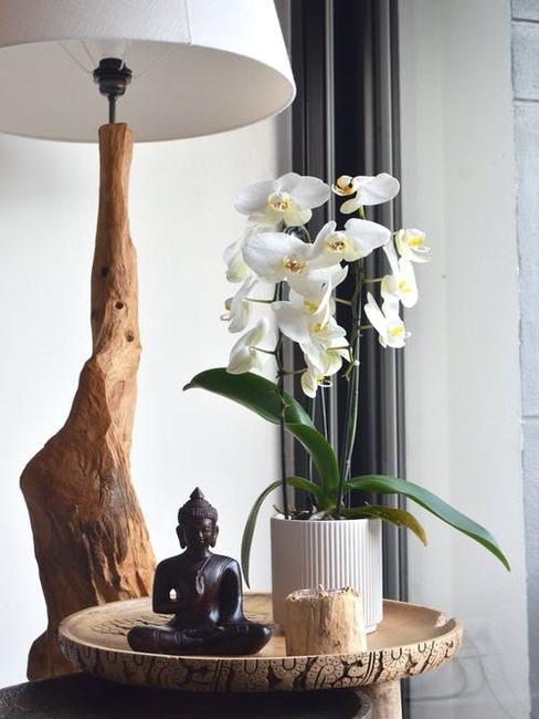 biela orchidea vo váze