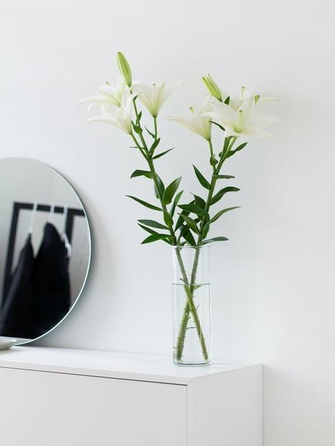 orchidea vo váze