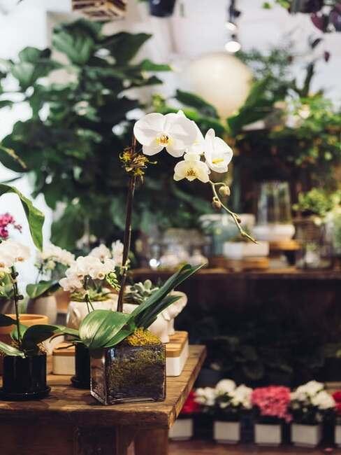 krásna orchidea