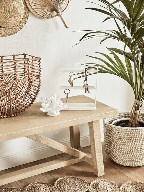 malá izbová palma