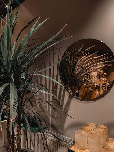 aranžovanie izbovej palmy