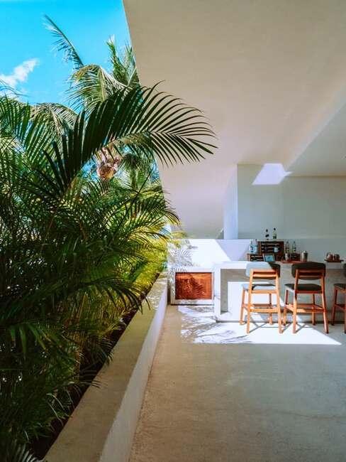izbová palma na balkóne