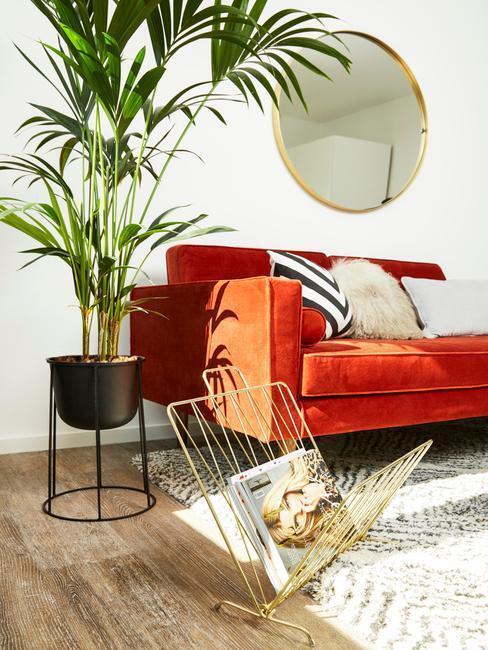 palma v interiéri