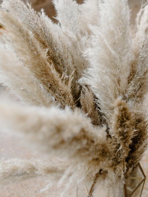 Sušená pampové trávy