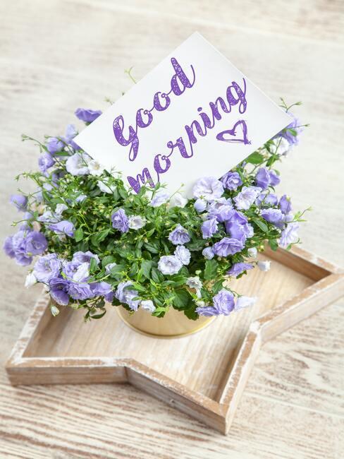 Fialové kvety v črepníku