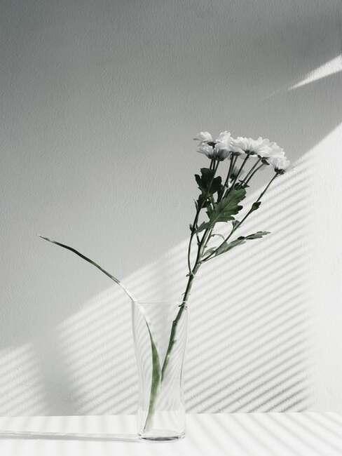 jednoduché biele kvety