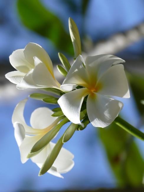 detail na biely kvet
