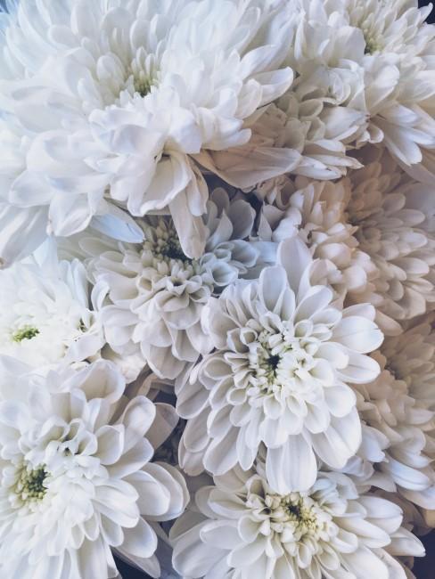 detail na biele kvety