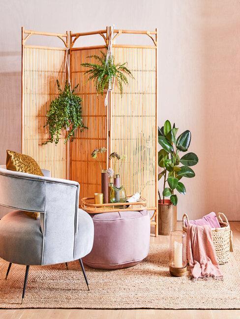 izbové rastliny v interiéri
