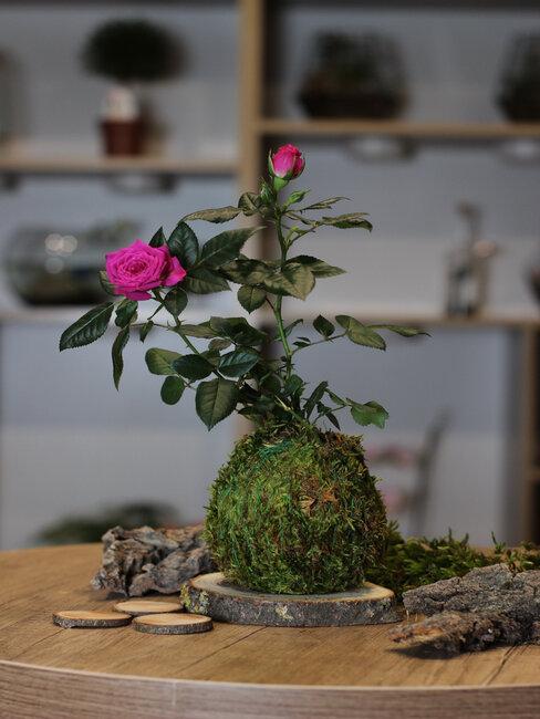 kokedama: kvetinová dekorácia