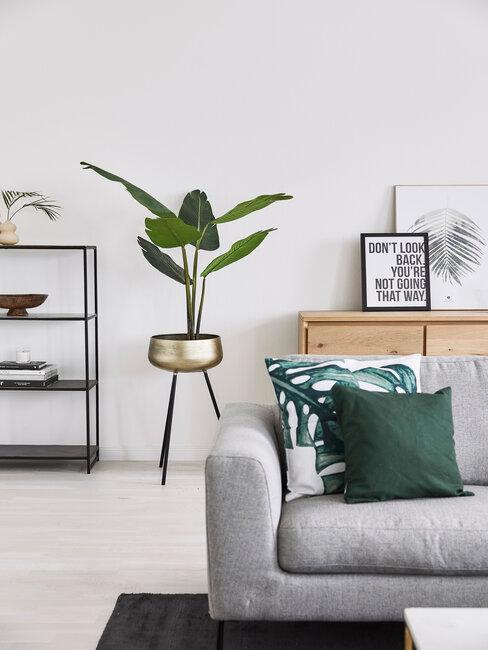 izbová palma v minimalistickej obývačke